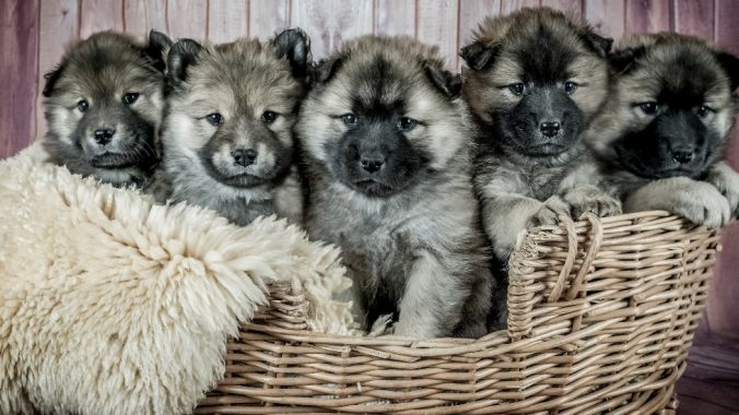 Dogs in a basket