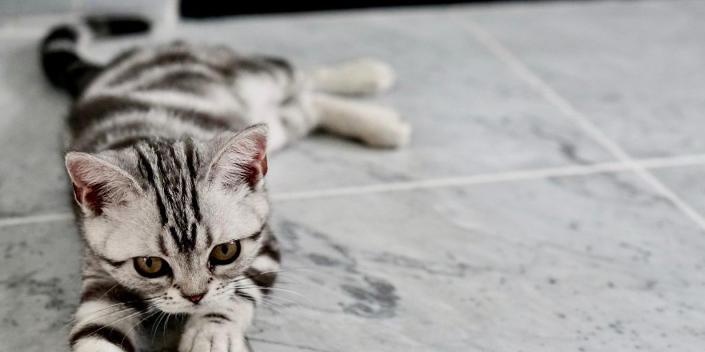 Small cat stretching