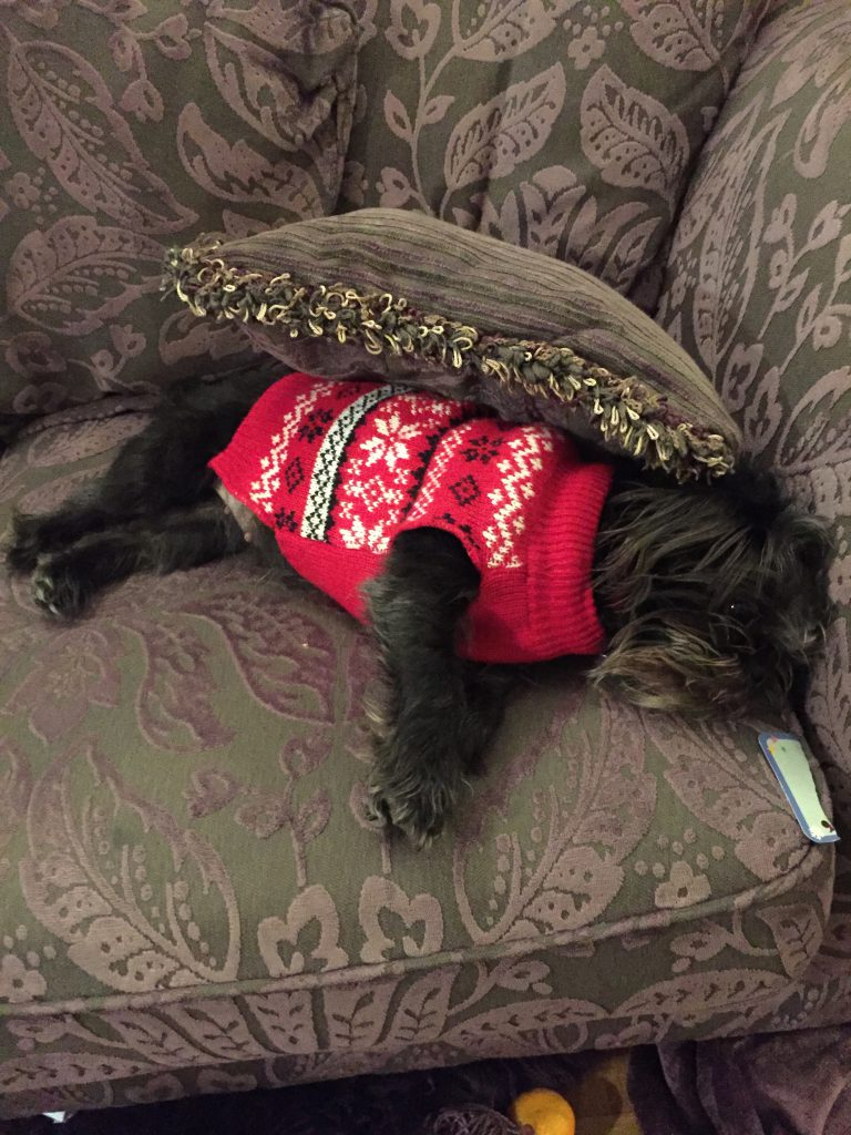 Dog in jumper