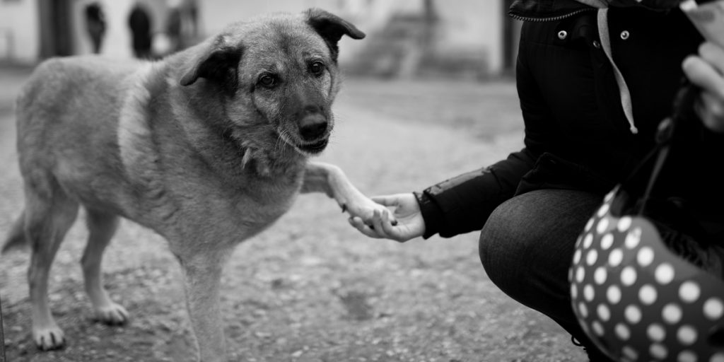 Dog giving paw